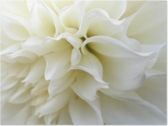 Poster Fleur blanc