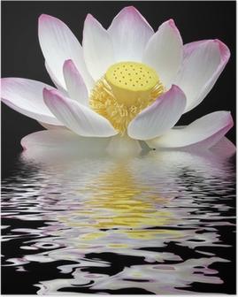 Poster Fleur de lotus sur fond noir