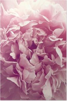 Poster Fleur de pivoine