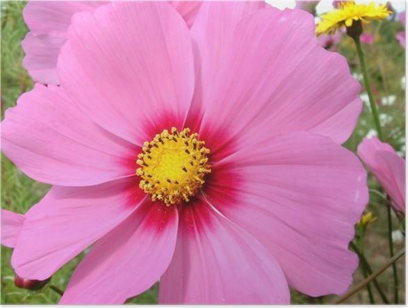 Poster Fleur Rose Pixers We Leven Om Te Veranderen