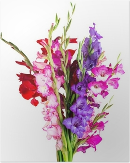 Poster Fleurs multicolores glaïeul
