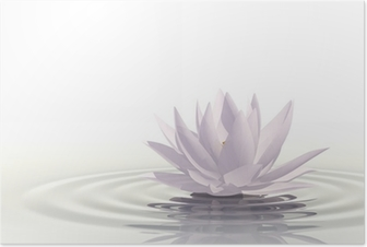 Floating waterlily Poster