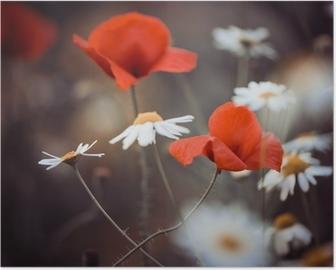 Póster Flores de amapola rojas y margaritas silvestres