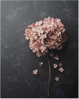 Póster Flores secadas del hydrangea en vista de negro superior de la mesa de la vendimia. estilo aplanada.