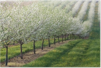 Flowering orchard Poster