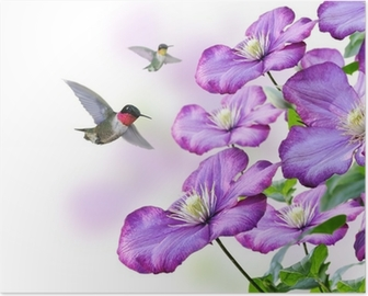 Flowers And Hummingbirds Poster