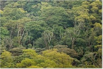 Poster Flygfoto över regnskogen canopy