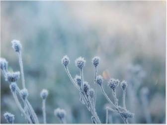 Poster Fond naturel abstrait de la plante gelée recouverte de givre ou de givre