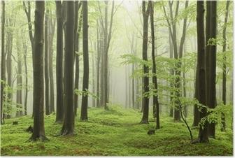 Poster Forêt de hêtres au printemps dans les montagnes