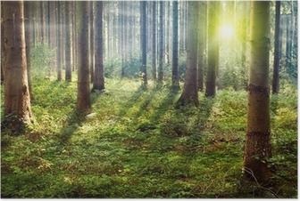 Poster Forêt Sunset