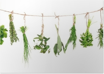 Fresh herbs hanging isolated on white background Poster