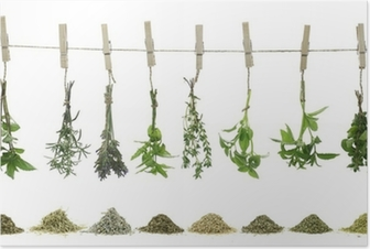 Fresh herbs hanging on a rope Poster