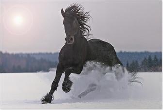 Poster Friese paard op sneeuw