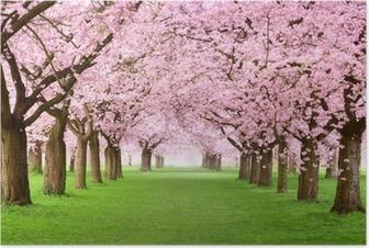 Gartenanlage in voller Blütenpracht Poster