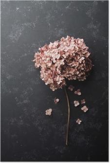 Poster Gedroogde bloemen hortensia op zwart vintage tafel bovenaanzicht. Plat styling.