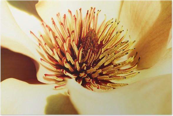 poster gelbe magnolie pixers vi lever f r f r ndring. Black Bedroom Furniture Sets. Home Design Ideas