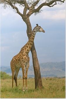 Poster Girafe et un arbre, Masai Mara, au Kenya