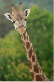 Poster Giraffe hoofd met nek