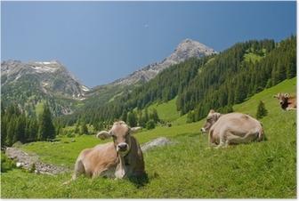 Glückliche Kühe Poster