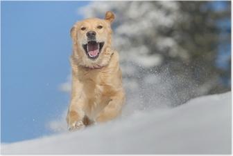 Poster Golden Retriever in de sneeuw