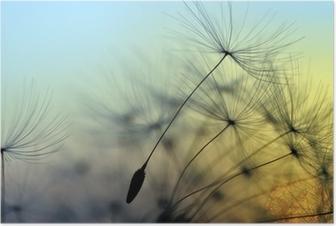 Golden sunset and dandelion, meditative zen background Poster