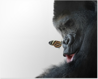 gorilla and butterfly animal friendship Poster