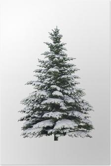 Poster Gran, träd, snö