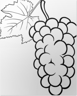 Hand Drawn Illustrations Of Grapes Poster Pixers We Live To Change