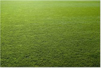 Green grass texture of a soccer field. Poster