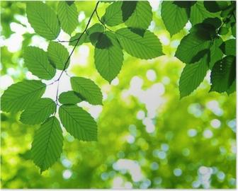 Póster Green leaves