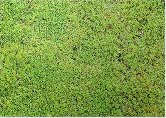 Green moss background Poster