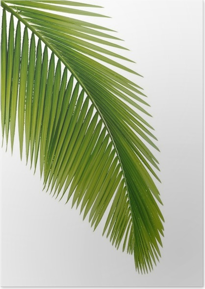 green palm tree poster pixers we live to change