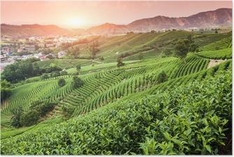 Poster Groene thee tuin op de heuvel, china