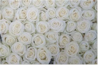 Poster Groep van witte rozen na een regendouche