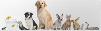 Group of pets sitting in front of white background Poster
