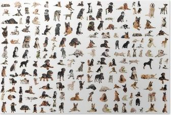 groupe de chiens de race Poster