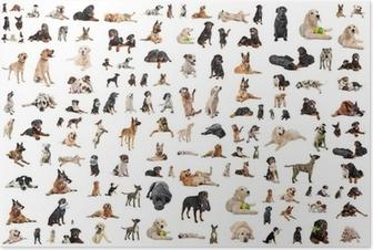 Poster Groupe de chiens de race