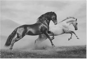 Poster Hästar springa
