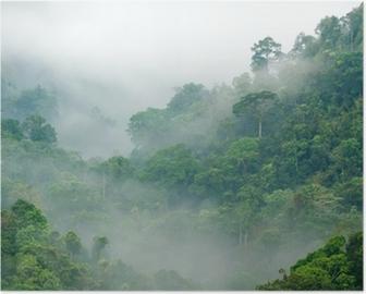 Morning fog in the rainforest Poster HD