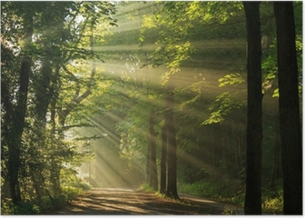 Sun rays shining through the forest Poster HD