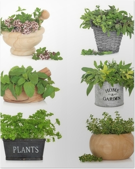 Herbs in Containers Poster
