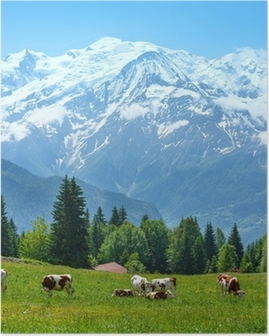 Herd cows on glade and Mont Blanc mountain massif view Poster
