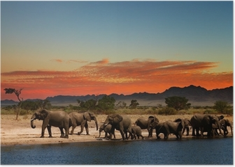 Herd of elephants in african savanna Poster