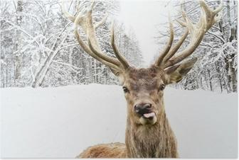 Poster Herten met mooie grote hoornen op een winterse landweg