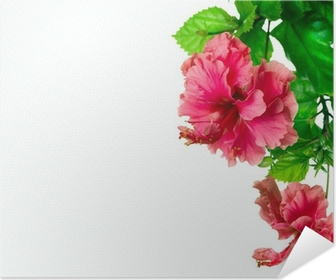 Hibiscus Flower Border Design Over White Poster Pixers We Live