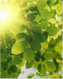 Póster Hojas verdes con los rayos solares.