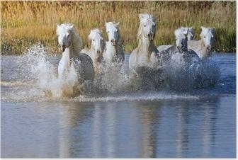 Horse Splash Poster
