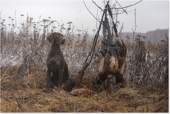 hunting dog Poster