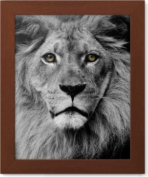 Poster i Ram Lion ögon