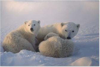 Poster Ijsberen, wordt vrouwelijke welp verpleging. Canadese Noordpoolgebied